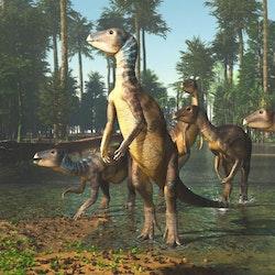 Weewarrasaurus pictures