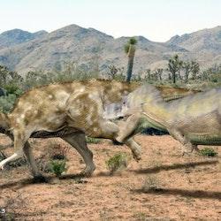 Aralosaurus pictures
