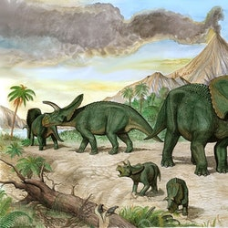 Arrhinoceratops pictures