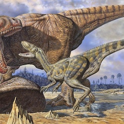 Carcharodontosaurus pictures