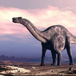 Dicraeosaurus pictures