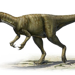 triassic dinosaur images facts the online database
