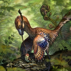 Jinfengopteryx pictures