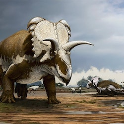 Medusaceratops pictures