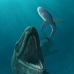 Mosasaurus pictures