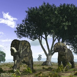 Nedoceratops pictures