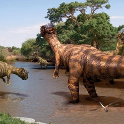 Pachycephalosaurus pictures
