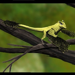 Scansoriopteryx pictures